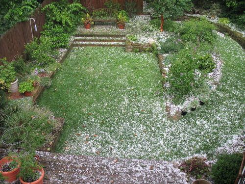 Hailstones litter the garden